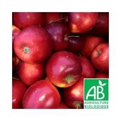 Pomme rouge Story [vendu par 1kg]