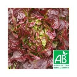 Salade FEUILLE DE CHENE rouge [la pièce] - (MPP)