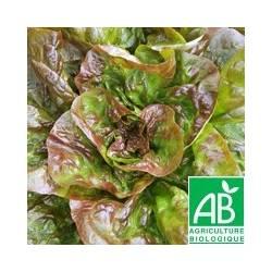 Salade ROUGETTE [la pièce] - (MPP)
