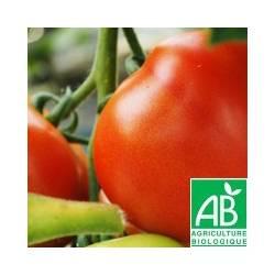 Tomate ronde PAOLA [vendu par 1kg] - (MPP)