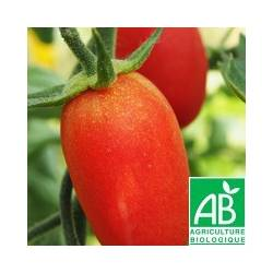 Tomate ovale MYRIADE [vendu par 1kg] - (MPP)