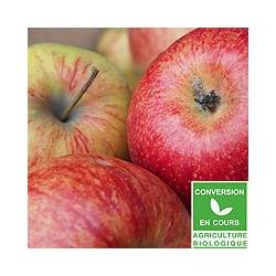 Pomme bicolore Jonagored [vendu par 1kg]
