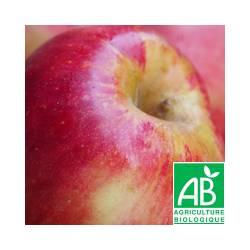 Pomme bicolore Pink Lady Cripps [vendu par 1kg]