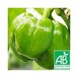 Poivron vert [Poids moyen : 250g]