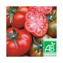 Tomate Rebelion [vendu par 1kg]