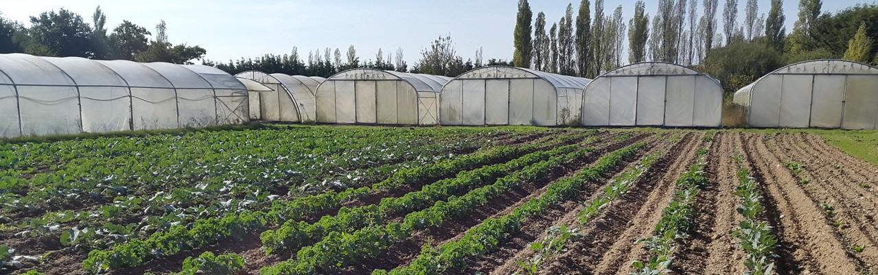 Paniers biologiques légumes de saison